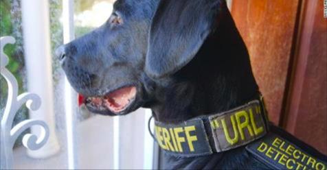 """El """"perro porno"""" policía encuentra evidencias en dispositivos electrónicos"""