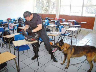 Usarán perros antidrogas en escuelas de Los Cabos