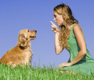 Conoce la manera correcta de hablar con tu perro.