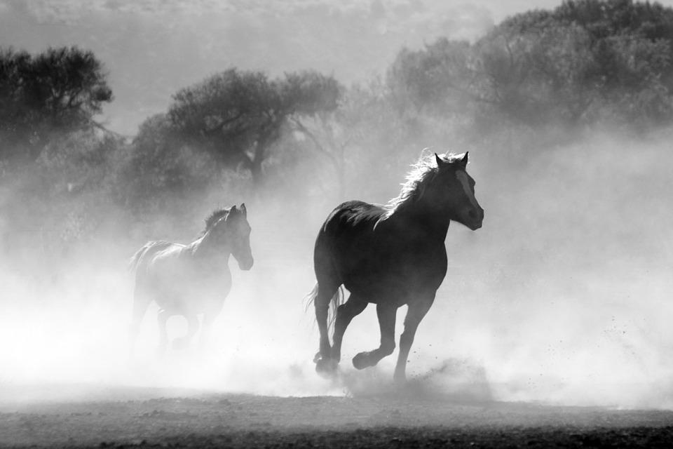 Estudio revela que caballos sólo provienen de 2 ante pasados
