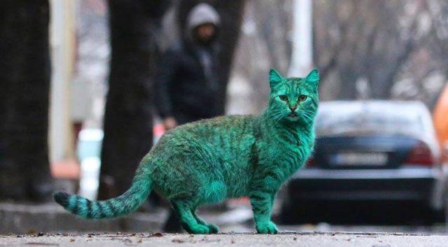 El misterioso gato alienígena verde que enamoró a medio mundo