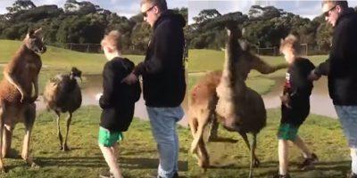 Canguro le mete tremendo golpe a un niños y sus padres se burlan de él (VIDEO)