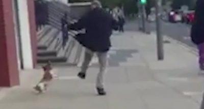 Hombre patea a su perro brutalmente y la gente lo confronta