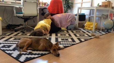 Artistas europeos proponen un teatro especialmente para mascotas