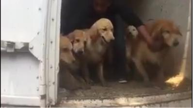 Autoridades rescatan a 30 perros que estaban en un patio de Iztapalapa