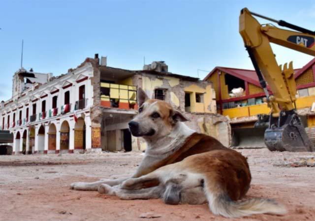 UNAM donará alimento para mascotas efectadas por sismo en Chiapas y Oaxaca