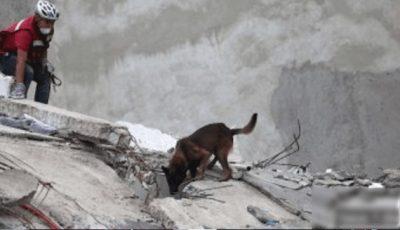 Binomios continúan con labores de rescate en la Ciudad de México