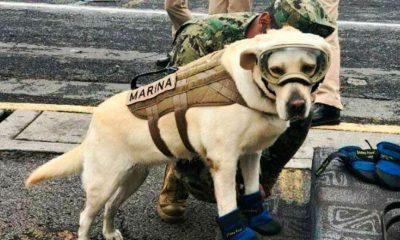 """Japoneses creen que Frida se llama Marina por…""""su chalequito"""""""