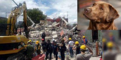 Ladridos de Rocko regresan la esperanza de encontrar vida en el devastado Xochimilco