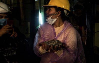 Encuentran tortuga viva entre los escombros