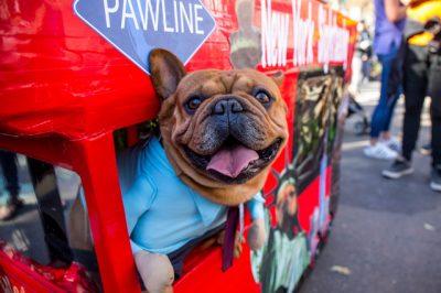 Mira las fotos del desfile anual de perros de Halloween de Nueva York