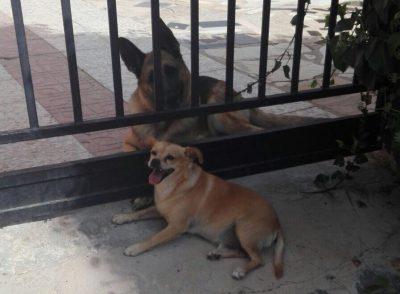 La historia de amor de estos dos perros causan sensación en las redes sociales