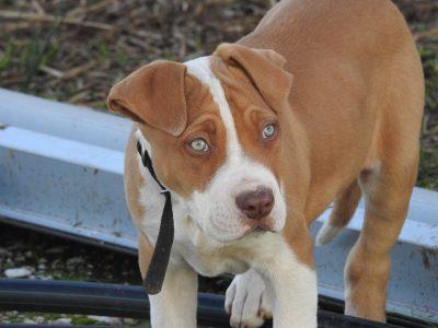 Sujeto amarró a un perro a su motocicleta y luego lo arrastró por las calles