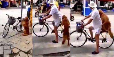 Perro cuida bicicleta de su amo para que no se la roben (VIDEO)