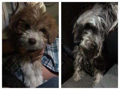 Logran rescatar a dos perritos que eran cruelmente torturados (VIDEO)