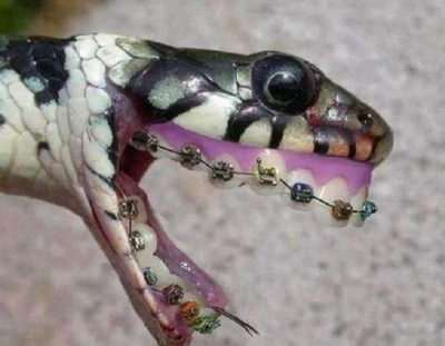 Serpiente venenosa muerde a hombre al salir de votar en Zulia