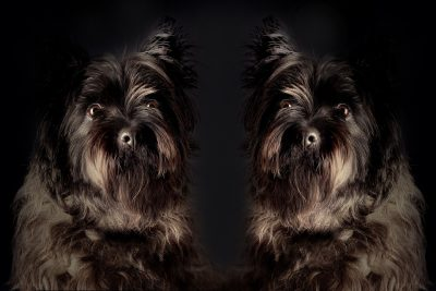 Empresa promete clonar a tu perro por 50 mil dólares