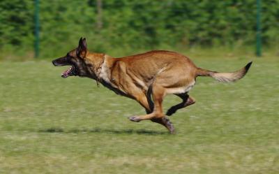 Binomio canino realiza hallazgo de más de dos toneladas de marihuana