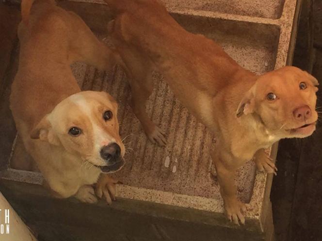 Rescatan a dos perros abandonados; se comían a su compañera para sobrevivir (VIDEO)