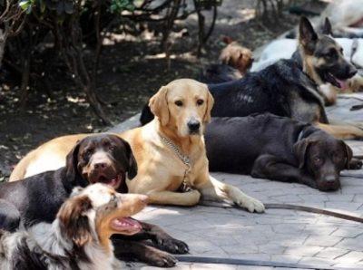 Peregrinos abandonan a sus perros en la Basílica de Guadalupe