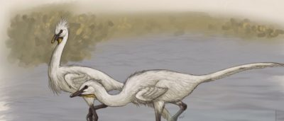 Científicos descubren dinosaurio cisne mitad Velociraptor