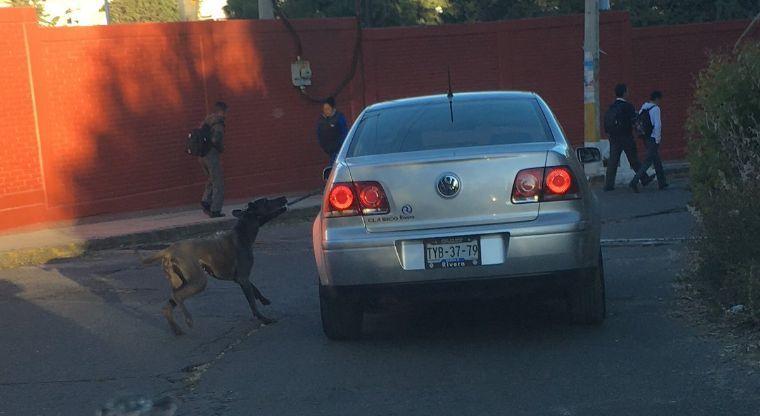 Amarran a perro a un auto y es arrastrado por la carretera