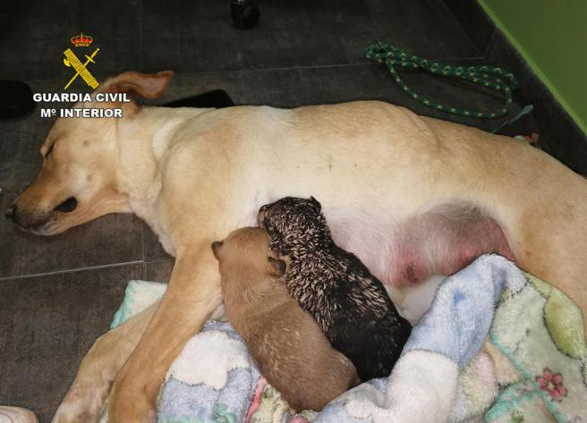 Entierran vivos a 9 cachorros y las redes explotan de indignación (VIDEO)