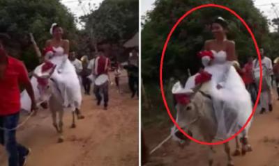 Novia llega en burro a su boda ¡y las redes la destrozan! (VIDEO)