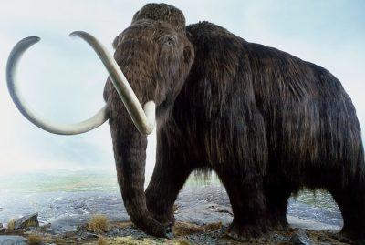 Mentes brillantes planean revivir al mamut