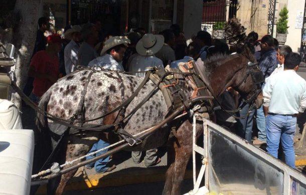 Guadalajara: activistas desconocen el destino de los caballos de las calandrias