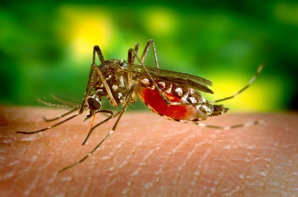 ¿Profecía bíblica? Pobladores son presa del pánico por una invasión de mosquitos