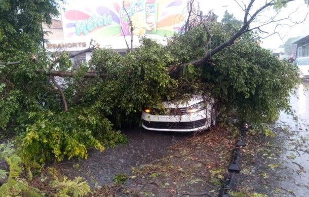 Hasta el momento, la Zona Metropolitana de Guadalajara y Zapopan han sufrido inundaciones y árboles caídos, así lo informó la Unidad Estatal de Protección Civil y Bomberos de Jalisco (UEPCBJ).