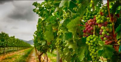 ¡Las cinco casas de vino que debes visitar en Querétaro!