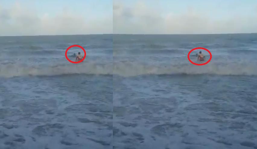 Resultado de imagen para tiburón arranca miembro brasil