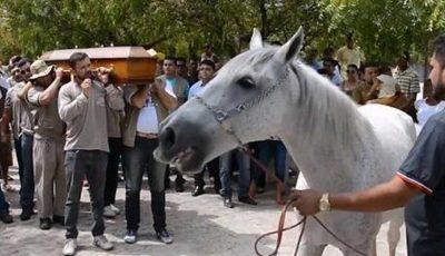 Caballo llora desconsoladamente en el funeral de su jinete y conmueve a las redes