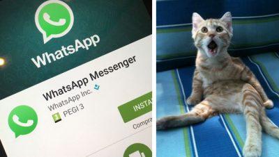 Actualización de WhatsApp borrará tus fotos y videos: mira cómo evitarlo