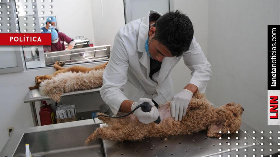 Edomex ocupa el primer lugar nacional en esterilizaciones de mascotas
