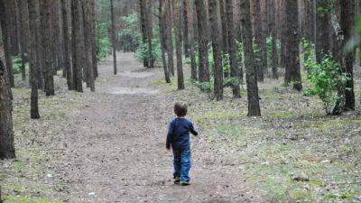 Niño de 2 años sobrevive tres días en el bosque tras perderse