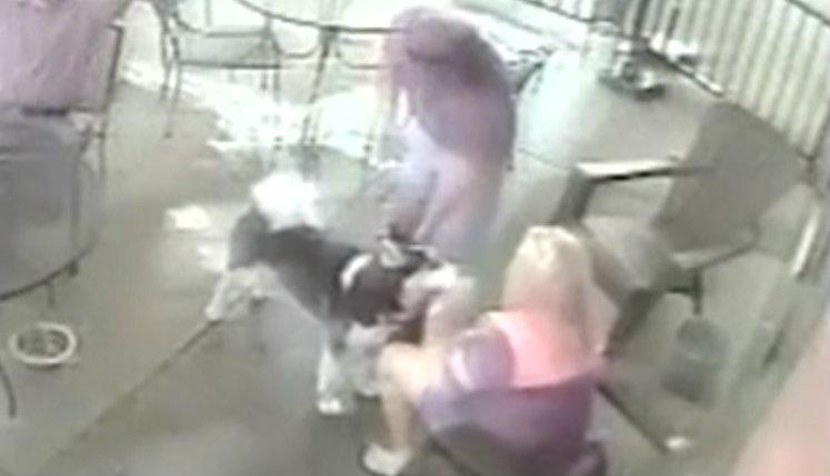 Exmodelo sufre brutal ataque en el rostro; perro la muerde ferozmente (VIDEO)