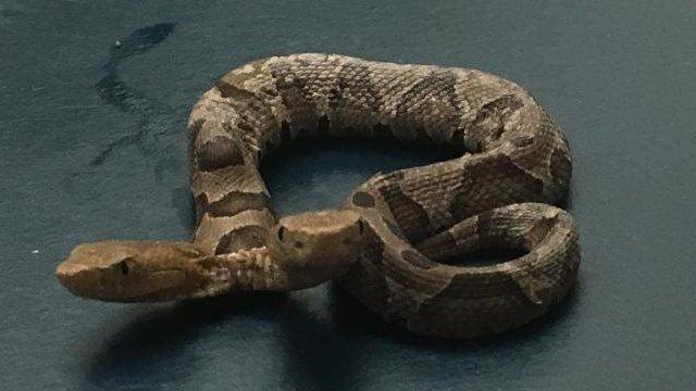 Aparece insólita serpiente de dos cabezas y sorprende a todo el mundo en redes