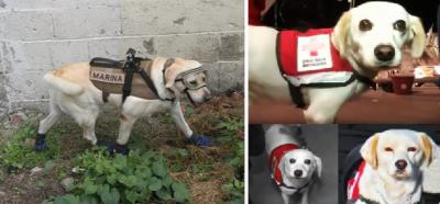 Amigos de Frida: los perros que salvaron vidas tras el sismo del 19S (FOTOS)