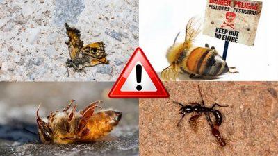 ATENCIÓN: Las abejas, mariposas, luciérnagas y muchos insectos están desapareciendo