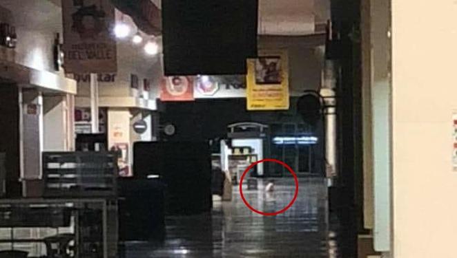 Captan a bebé fantasma gateando en centro comercial de Mexicali (FOTOS)