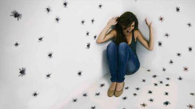 ATENCIÓN: Investigadores recomiendan no matar a las arañas que encuentres en tu casa