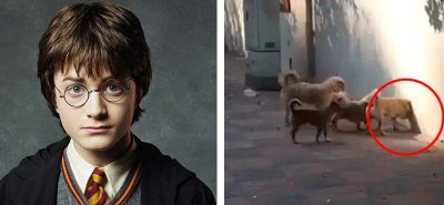 ¡<i>Portal de Harry Potter</i>! Perros impactan al atravesar una pared mágicamente