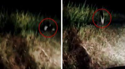 <i>¡Aterrador!</i> Graba macabra criatura de una sola pierna en el campo (VIDEO)