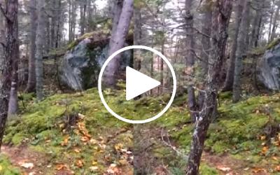 Asombra en redes insólito momento en el que la Tierra 'respira' (VIDEO)