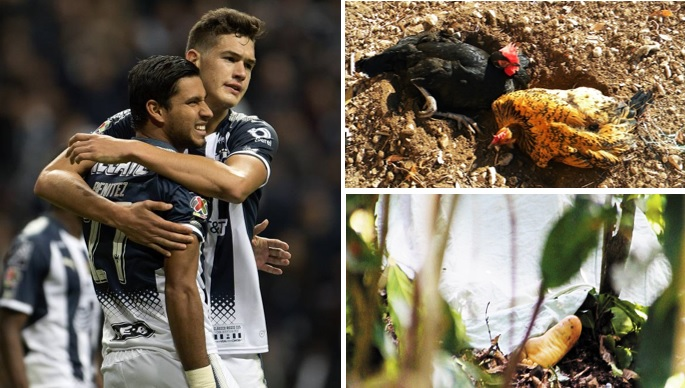 Brujería y asesinato infantil: las maldiciones del estadio de Monterrey