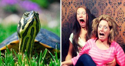 Tortuga mutante con 2 cabezas y 6 patas causa terror en internet (FOTOS)