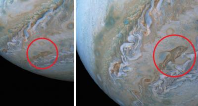 NASA revela imagen de un 'delfín cósmico' en las nubes de Júpiter